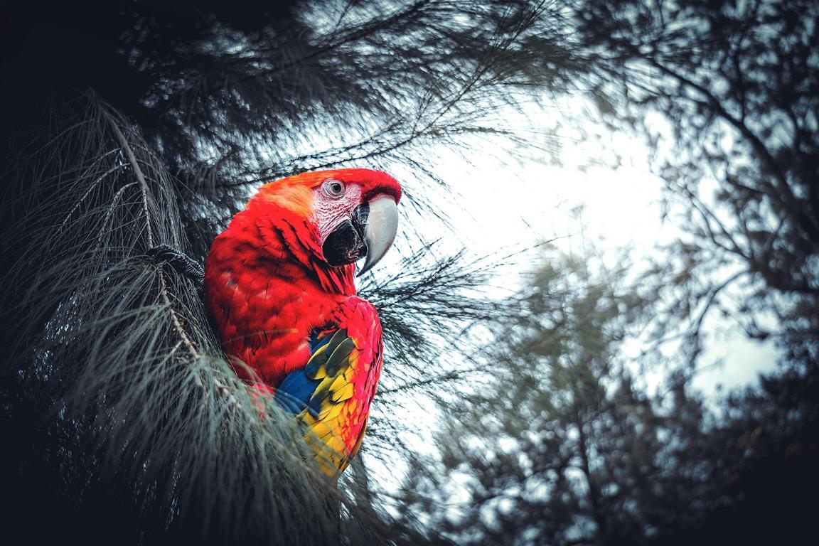 Natur in Kolumbien